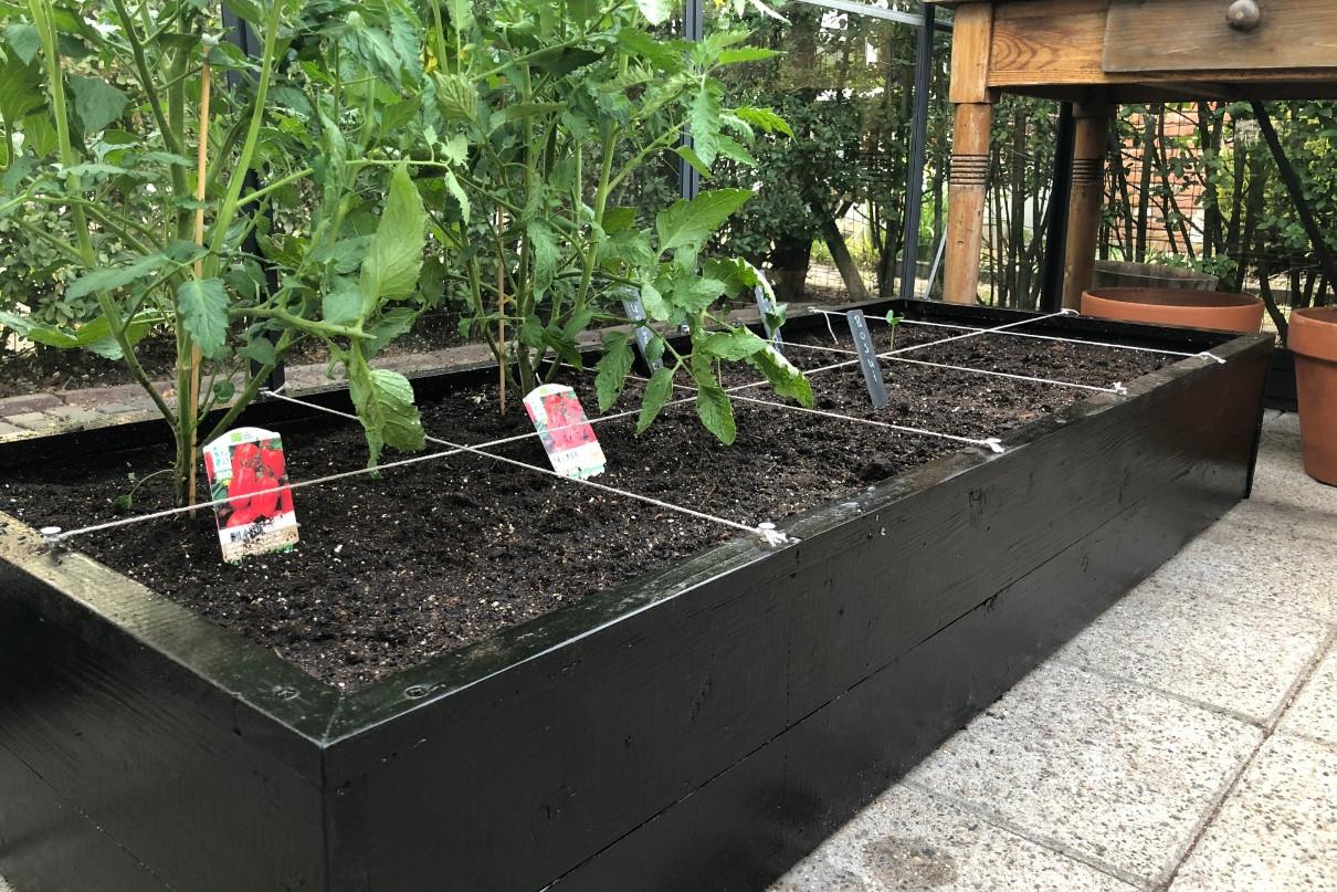 Tomaten kweken in moestuinbak concept Makkelijke Moestuin