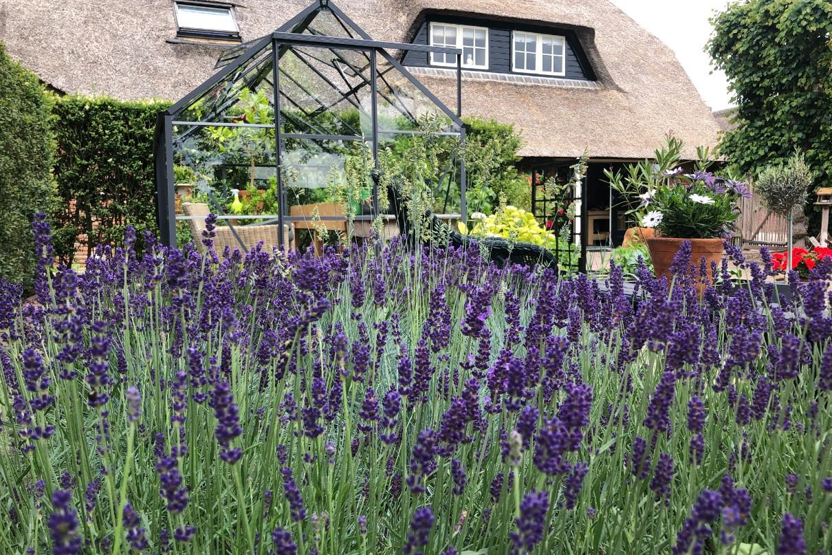 Lavendel in tuin bij tuinkas Makkelijke Moestuin