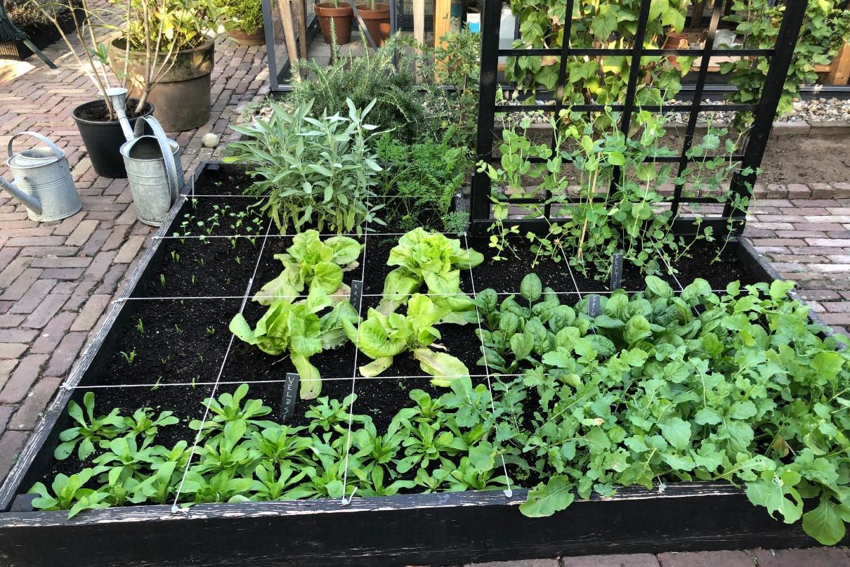 Moestuinbak square foot gardening Makkelijke Moestuin