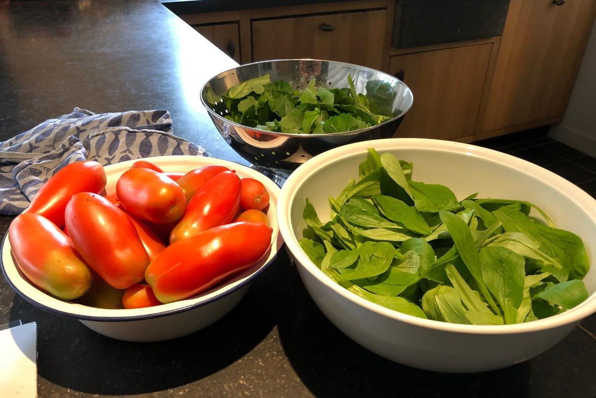 Tomaten kweken oogsten
