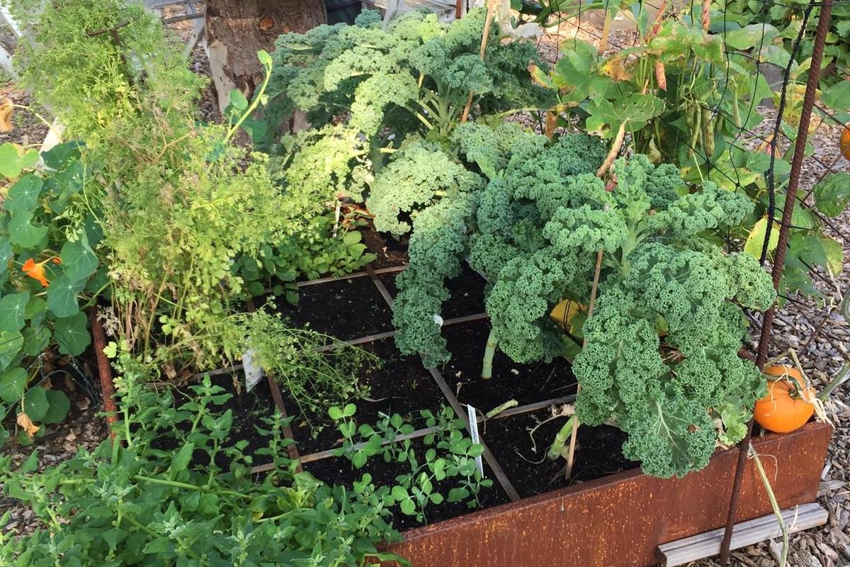 Moestuinbak groen square foot gardening